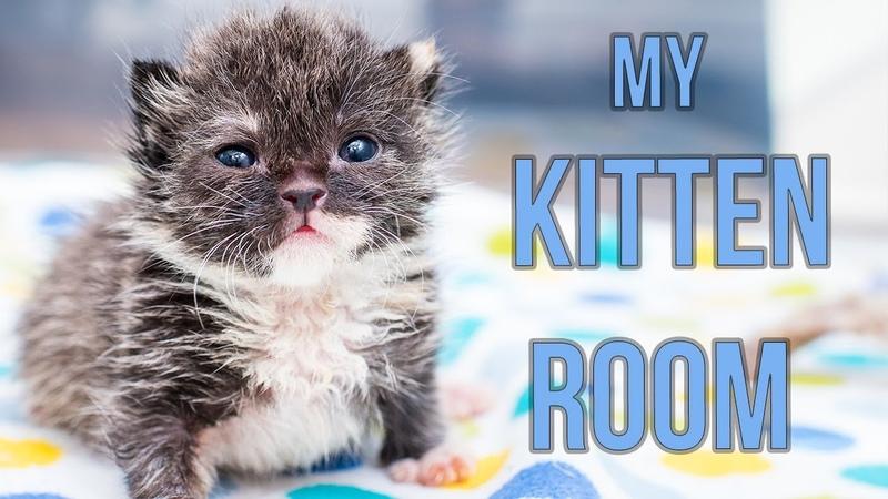 Sneak Peek Inside My Kitten Nursery