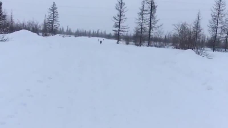 Канадский волчонок 9 месяцев , на улице минус 38