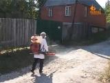 В Ельце на пересечение улиц Клары Цеткин и Фурманова введен карантин по бешенству