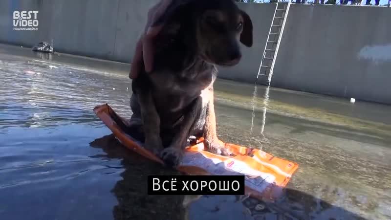 Неравнодушные люди и бедный щенок
