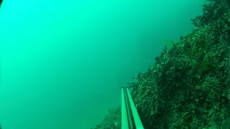 Подводная охота. Горбыли 26.07.2012