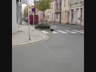 ещё кто от кого побегает))))