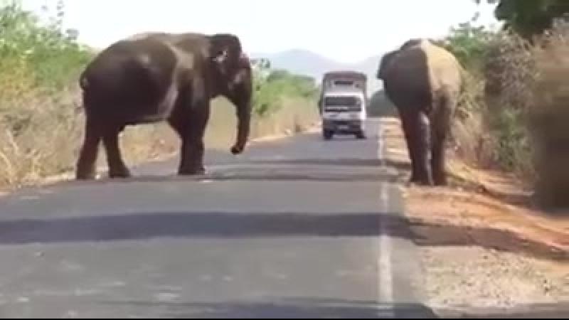 Проезд крышует банда слонов