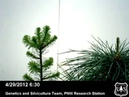 Tree Growth Strategies: Douglas Fir and Western White Pine Greenhouse