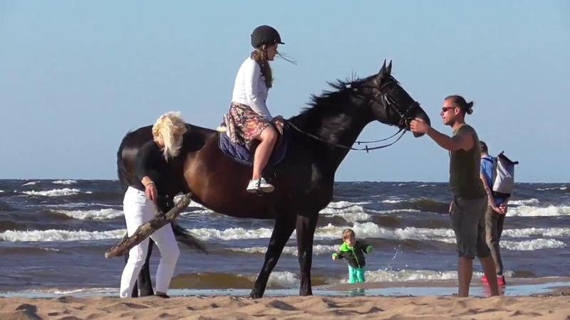 Море, лошади, лес. Тест PANASONIC HC-V180 зум, стабилизация.