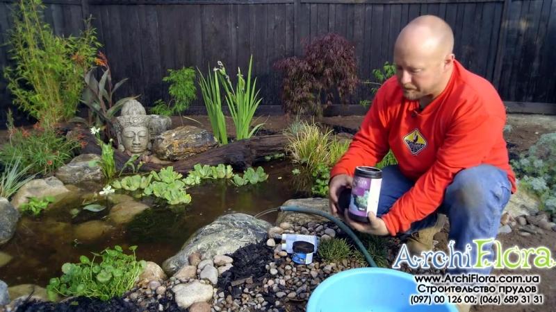 Как сделать декоративный водоем для лягушек. Ч. 6 _ Запуск головастиков