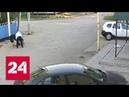 Неравный бой почему полиция не задержала ростовского боксера избившего москвича Россия 24