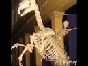 We don't speak americano Skeleton ver.