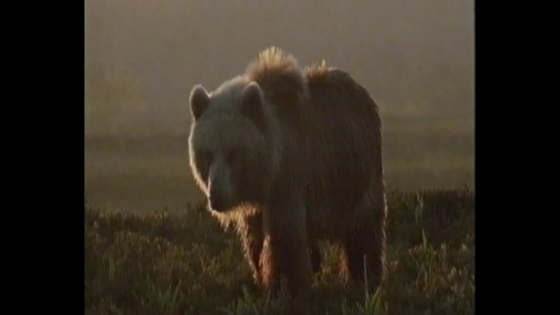 Камчатка - на краю цивилизации в тесной связи с дикой природой .