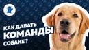 Как давать команды собаке