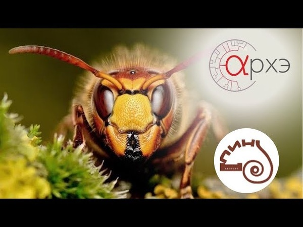 Олеся Стрельникова Кое-что об эволюции насекомых