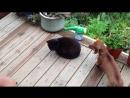 Джорджи и кот
