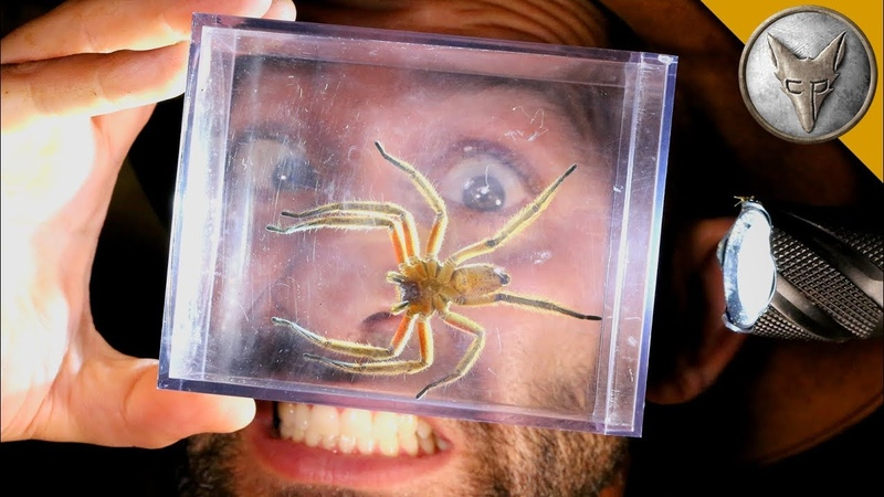 World's MOST DANGEROUS Animal Catches