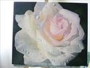 Рождение розы. Живопись маслом, гиперреализм/oil painting. По МК Надежды Ильиной