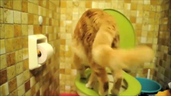 Мастер класс от кота как использовать туалет