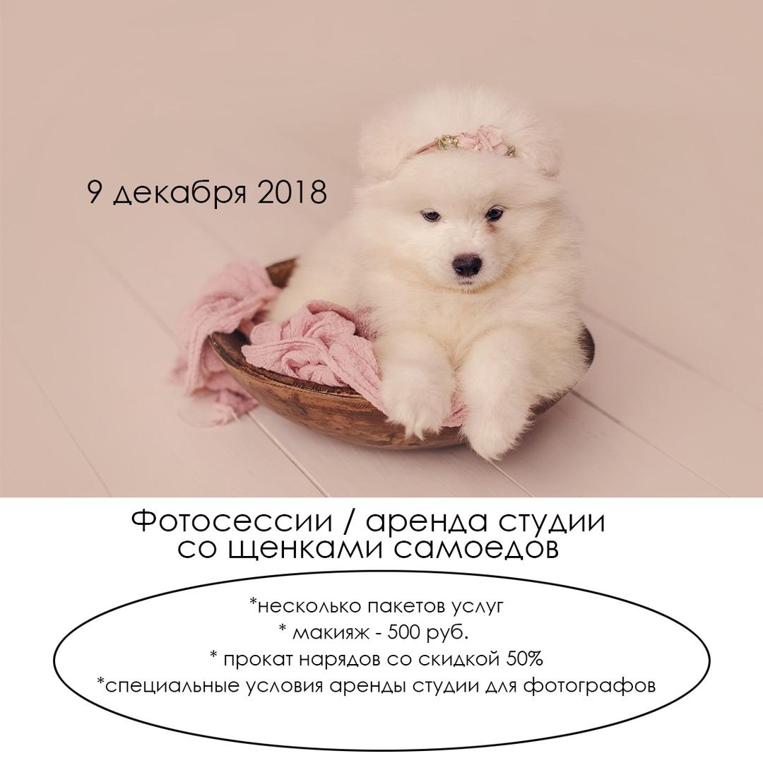 Афиша Самара Фотосессии / аренда студии со щенками самоеда