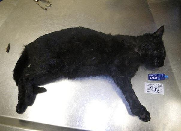 36-летняя Абби Манн из города Честерфилд, Британия, основательно приняла на грудь, после чего взяла и утопила двух своих котов, Боба и Макса, в унитазе. Затем она позвонила в полицию и истерично