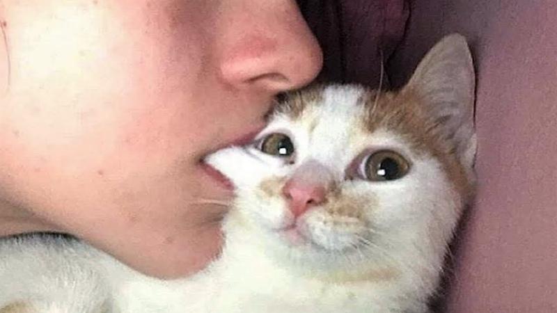 힐링되는 귀여운 고양이와 개 웃긴영상 2018 - 7탄ㅋㅋㅋㅋㅋ