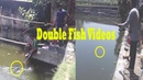 Double Fish Videos Cast Fishing Two Fish catch One Time Ripe Fish Hunter Double fish Catch fish