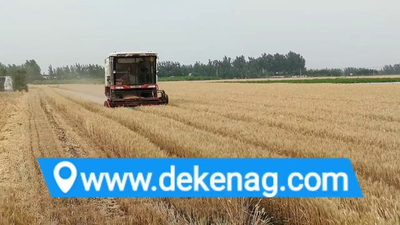 Shandong weifang wheat harvester working condition