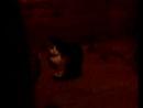 2014 года август мои животинки Пеструшка кошка Мэри которой здесь 17 лет пушистая и Сёмка помесь с таксой Видео 0023