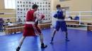 Чемпионат края по боксу проходит в Хабаровске
