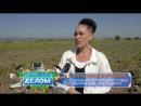 Сюжет ТВ Альтес о новшествах в земельном законодательстве