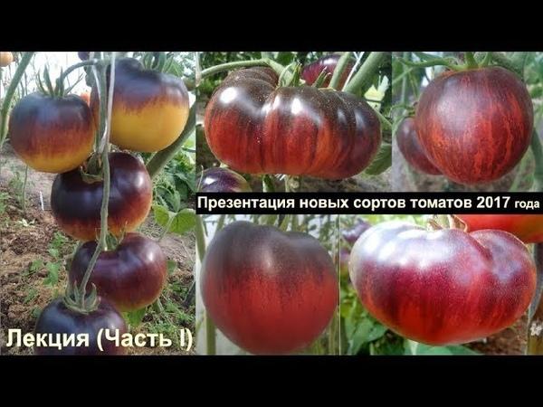 Лекция (Часть I) Презентация новых сортов томатов 2017 года