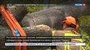 Новости на Россия 24 В Олимпийском состязались роботы