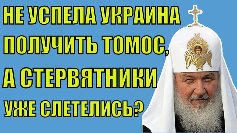 Не успел Томос прийти в Украину, а стервятники уже слетелись