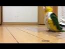 Попугайчик Шлеп-Шлеп-Шлеп