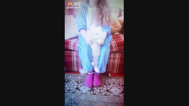моя кошка Василиса я её люблю