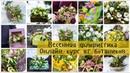 Онлайн-курс по флористике Главные цветочные праздники. Часть вторая Весенние букеты
