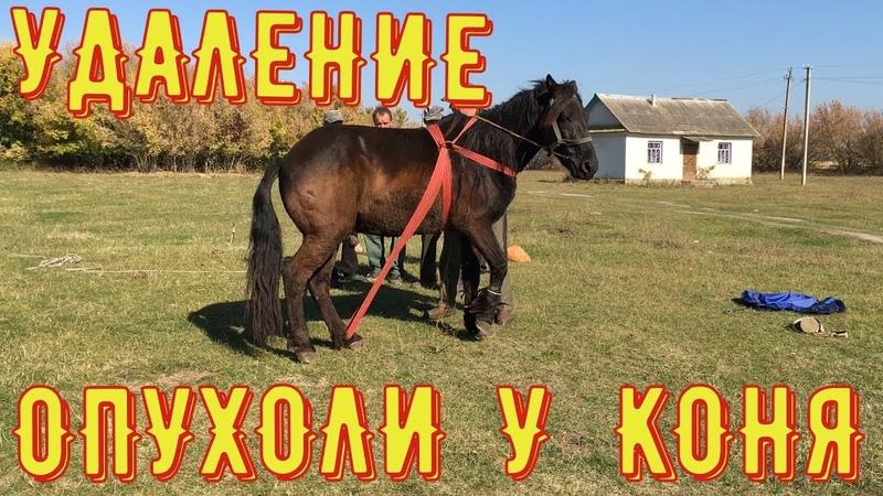 Удаление опухоли у коня