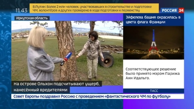Новости на Россия 24 • В Иркутской области насекомые-вредители под корень съедают реликтовые леса