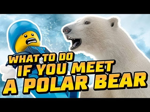 LEGO City What to do if You Meet a Polar Bear LEGO City National Geographic Kids