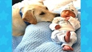PATIENT DOGS ALWAYS BESIDE BABY Dog loves Baby Compilation
