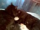 Мои котейки - Анфиска и Пупсик