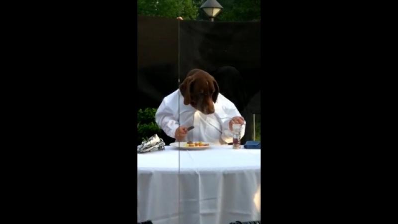 Ужин аристократа mp4