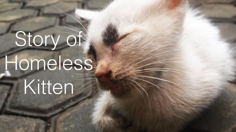 Story of homeless kitten Rescue kitten