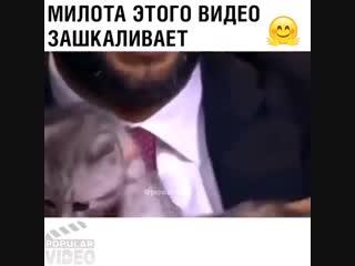 Любовь к животным)