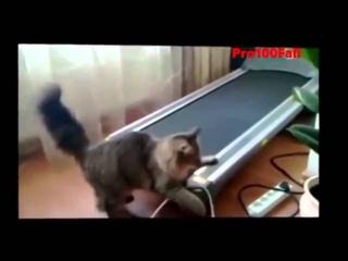 МОИ ЗАБАВНЫЕ ЖИВОТНЫЕ приколы кошки животные псы угар