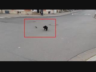 Почти как Том и Джерри. Наглый кот напал на крысу, но не ожидал столь агрессивного ответа
