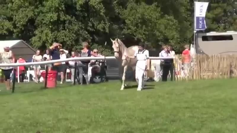 Ахалтекинец одна из самых красивых лошадей в мире♥