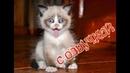 Приколы с котами – СМЕШНАЯ ОЗВУЧКА ЖИВОТНЫХ – Тест на психику 2018 с DOMI SHOW