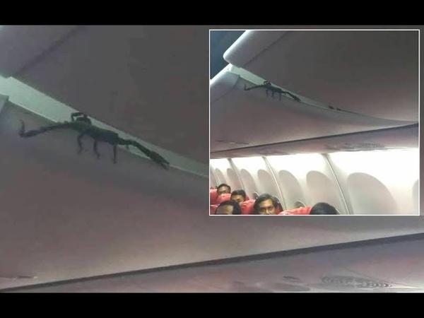 Passengers Find Live SCORPION On Plane
