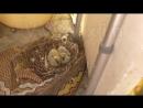 [День 9] - ПТЕНЦЫ ЧЕРНЕЮТ - пока голубь улетел повышаем бардюр у нас на балконе