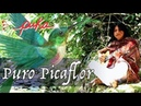 PURO PICAFLOR - Medicine Song by PUKA