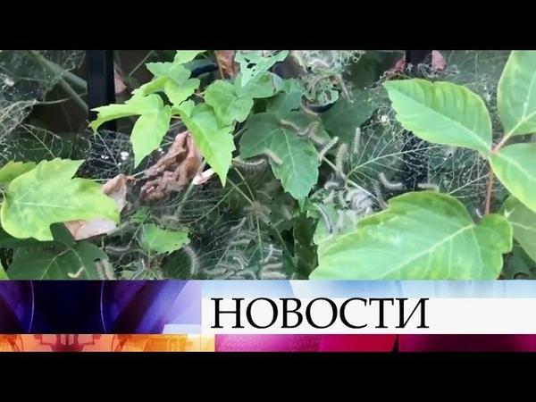Краснодарский край переживает нашествие гусениц ущерб от которых сравним лишь с тучами саранчи