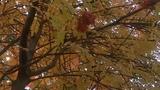 Золотая осень Зинаида Миркина Здесь тишина стоит такая...
